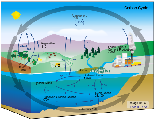 Toby Elwin, carbon cycle, systems theory, organization development root cause
